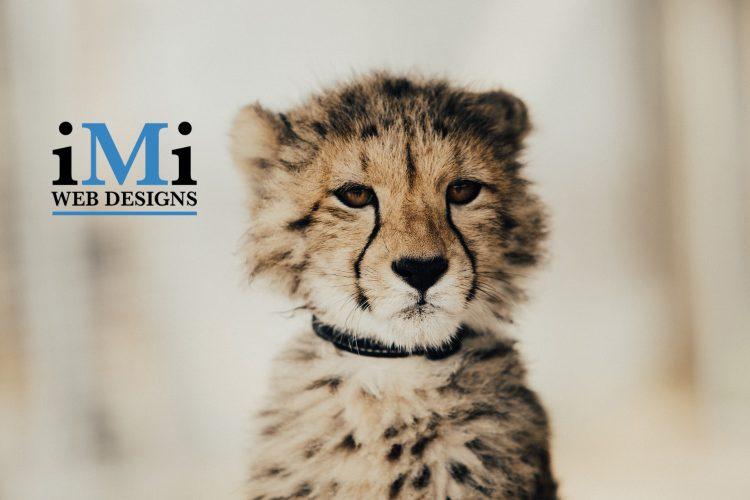 Picture of iMi Web Designs company logo beside a very cute cheetah cub